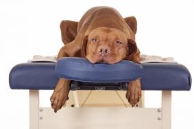 Animal-Massage-Therapy